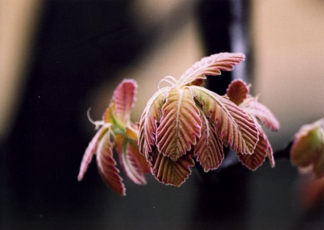 2009_04